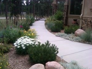 Entry Walk Plantings